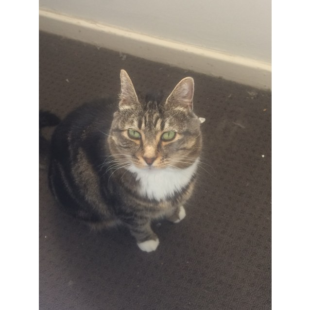 Photo of Dolly (Located In Murrumbeena)