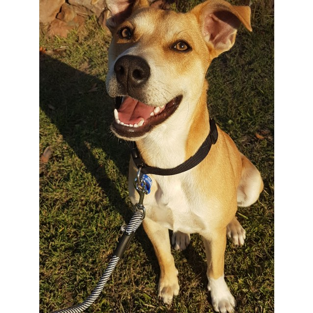Photo of Eddie ~ 7 Month Old Mixed Breed Boy