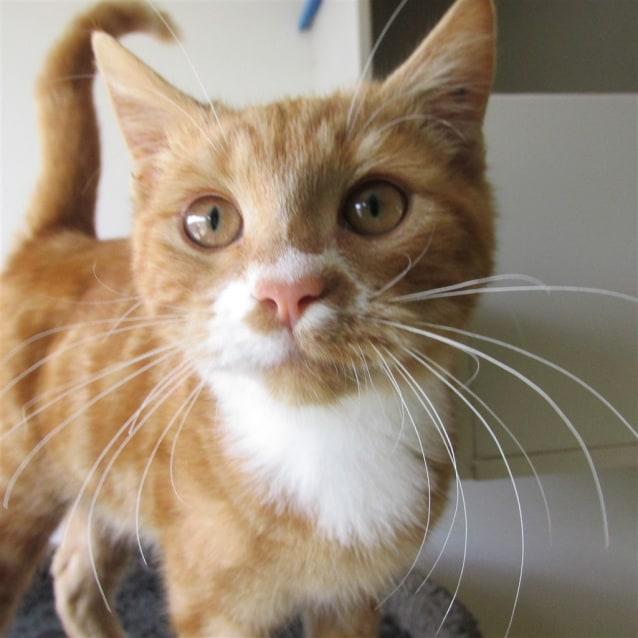 Photo of Wilson