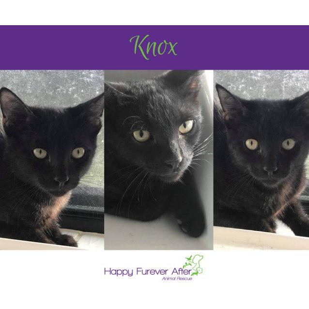 Photo of Knox