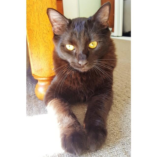 Photo of Sootie