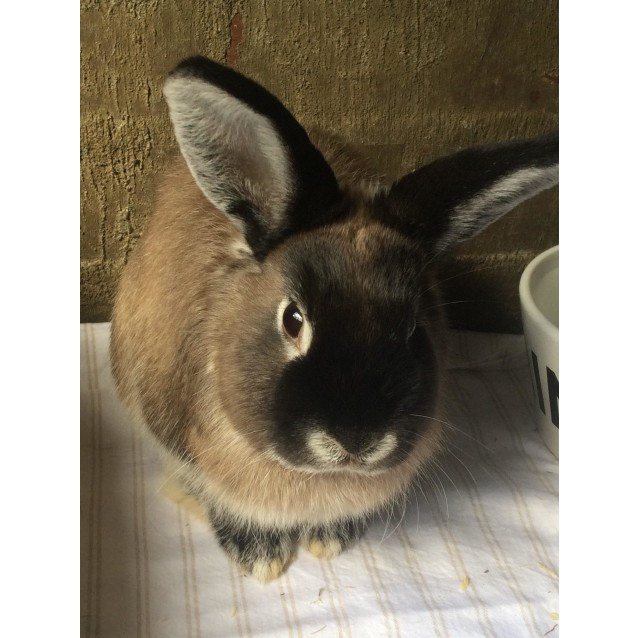 Photo of Hazelnut