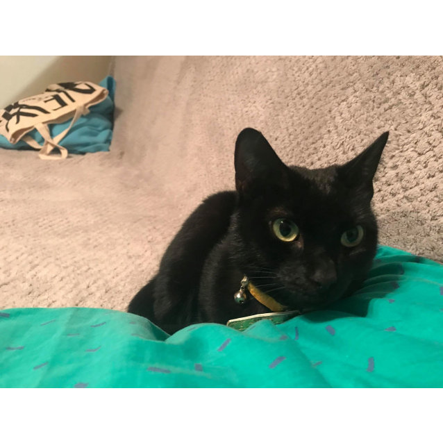 Photo of Tabatha The Beautiful Black Cat