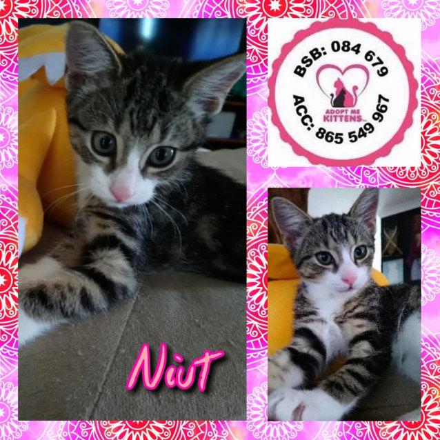 Photo of Niut