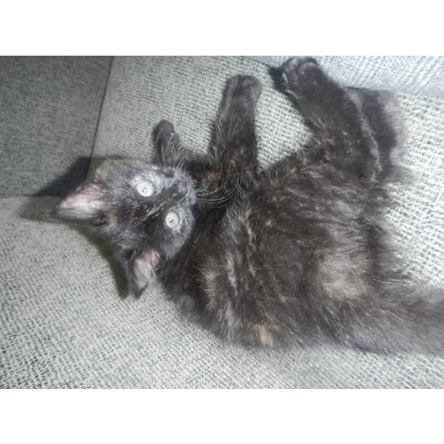 Photo of Sooty