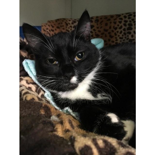 Photo of Otis Id40431