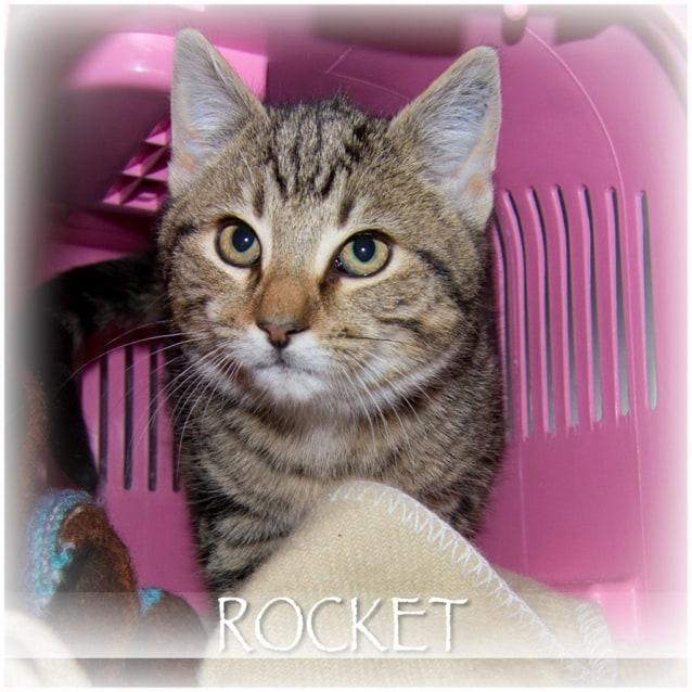 Photo of Rocket