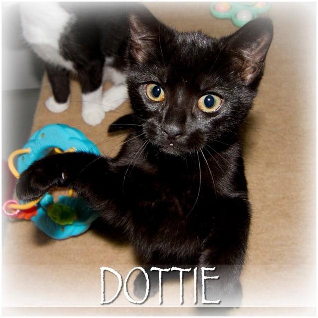 Photo of Dottie