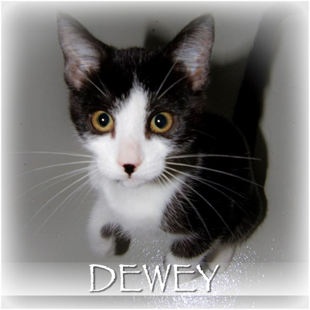Photo of Dewey
