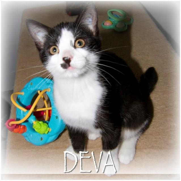 Photo of Deva