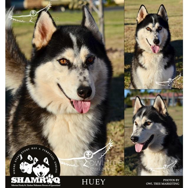 Photo of Huey
