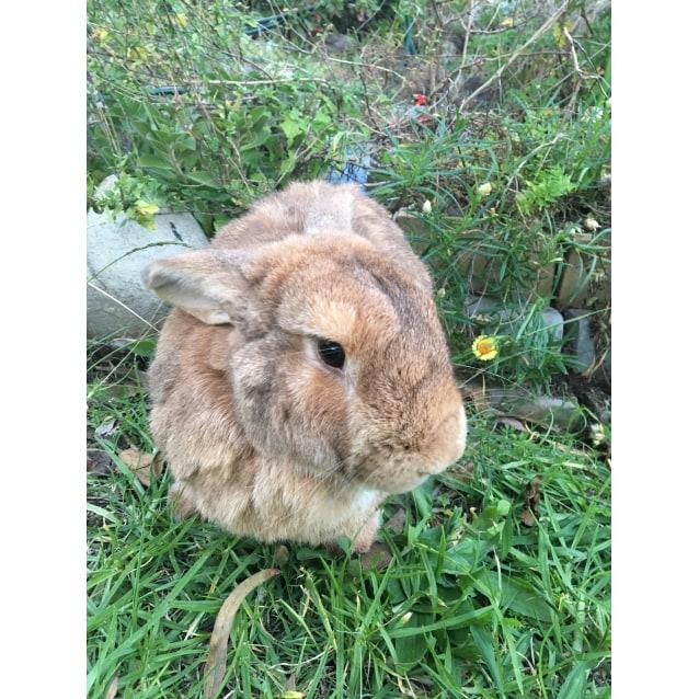 Photo of Piccolo