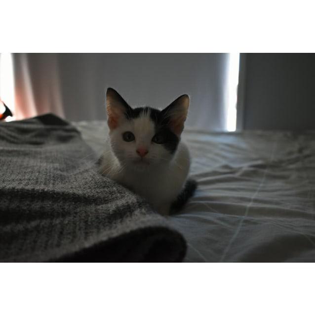Photo of Sundae