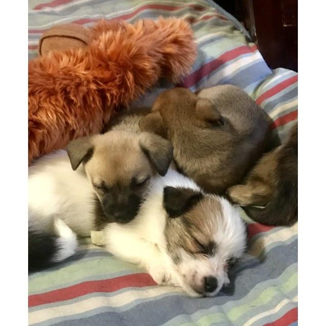 Photo of Tiny Children Puppies