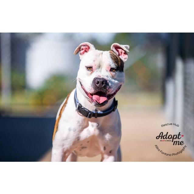 Photo of Tyson (Pcc 299)