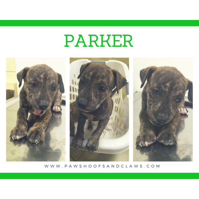 Photo of Bebe, Parker Or Lola