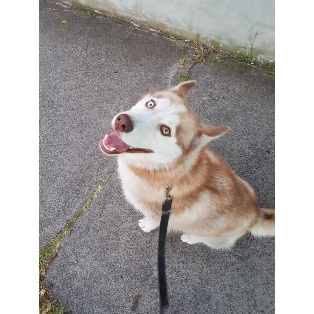 Photo of Loofy