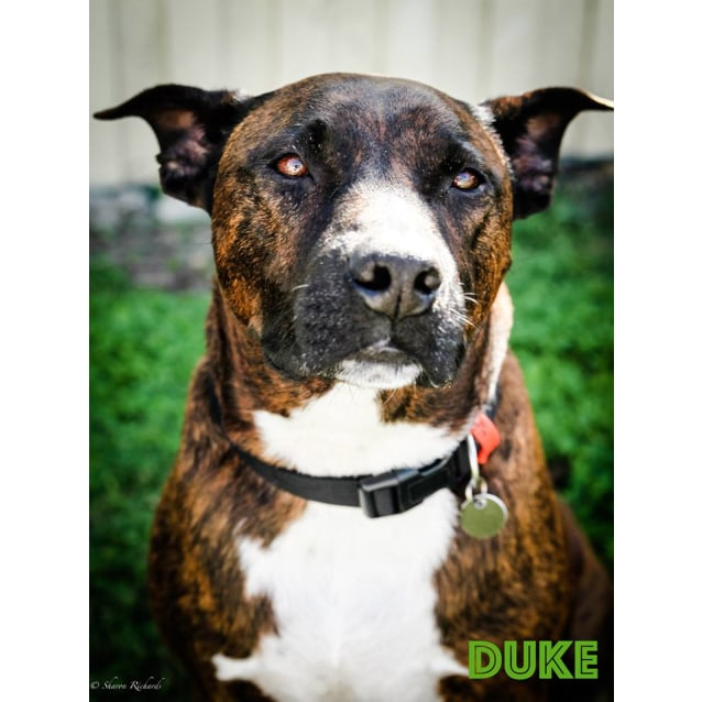 Photo of Duke