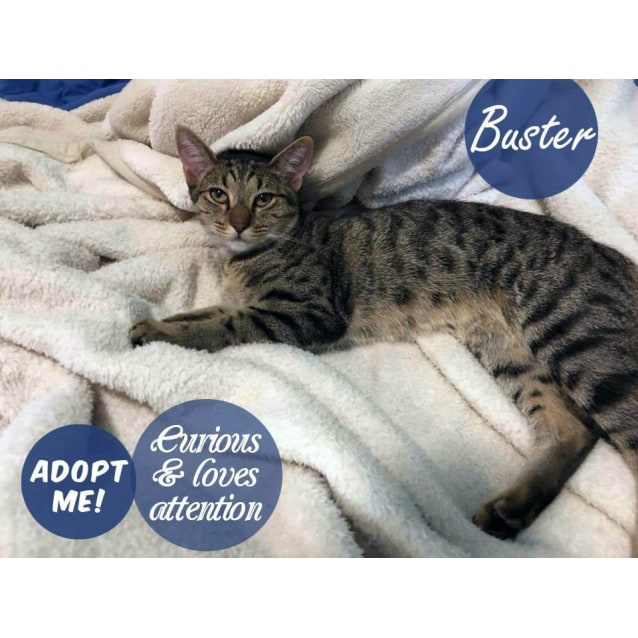 Photo of Buster