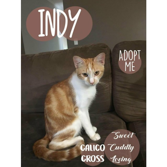 Photo of Indy
