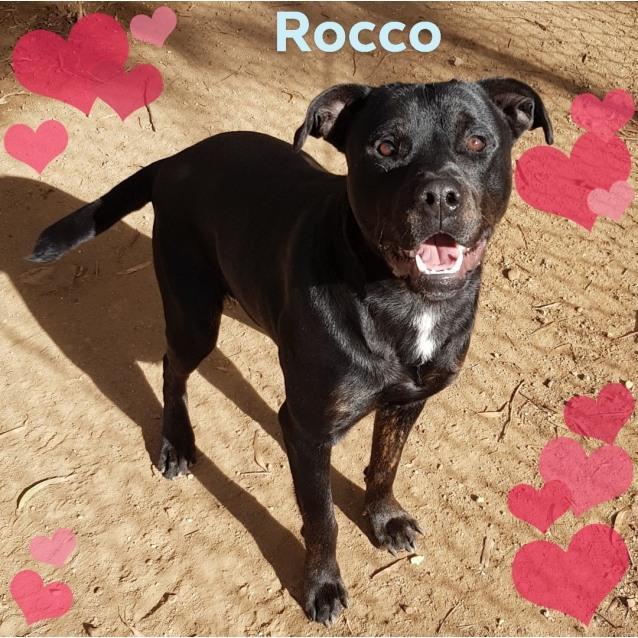 Photo of Rocco (390518)