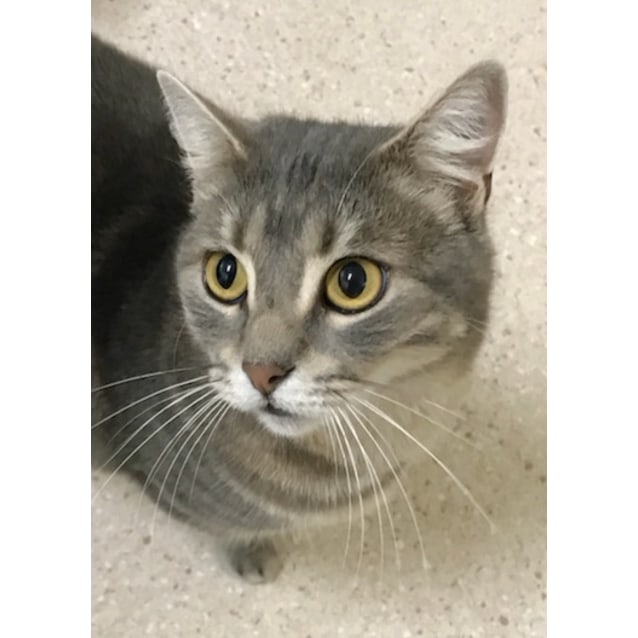 Photo of Pouncer   Located In East Melbourne