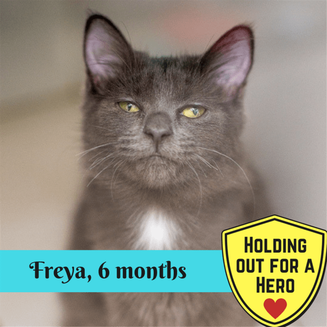 Photo of Freya