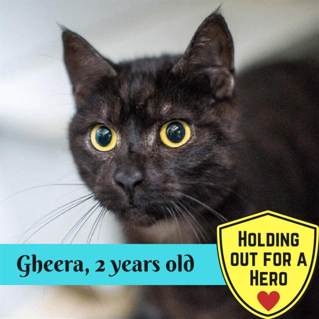 Photo of Gheera