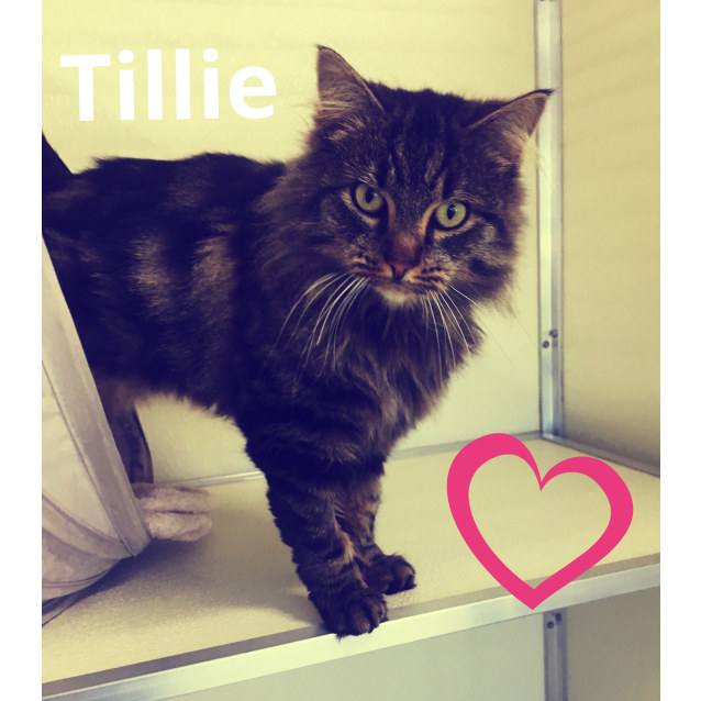Photo of Tillie
