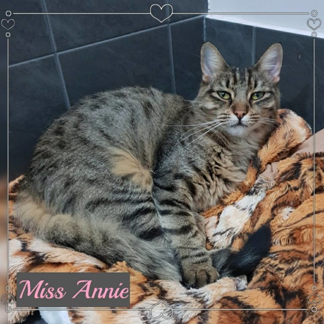 Photo of Miss Annie