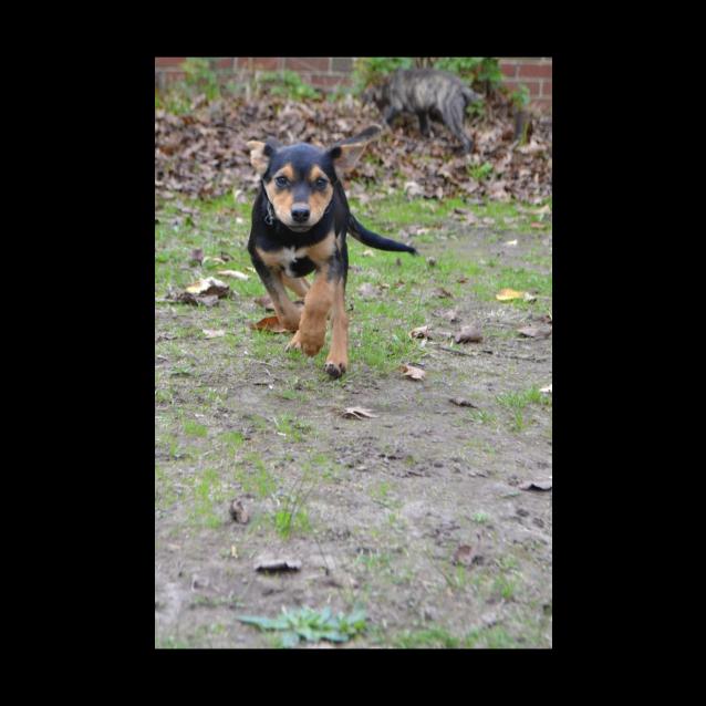 Photo of Mavis (On Trial)