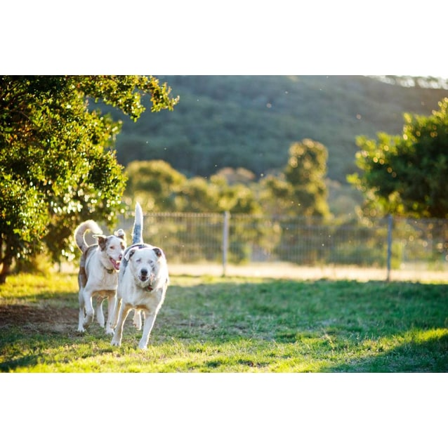 Photo of Jackson & Molly