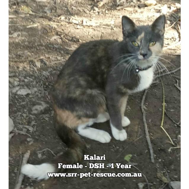 Photo of Kalari