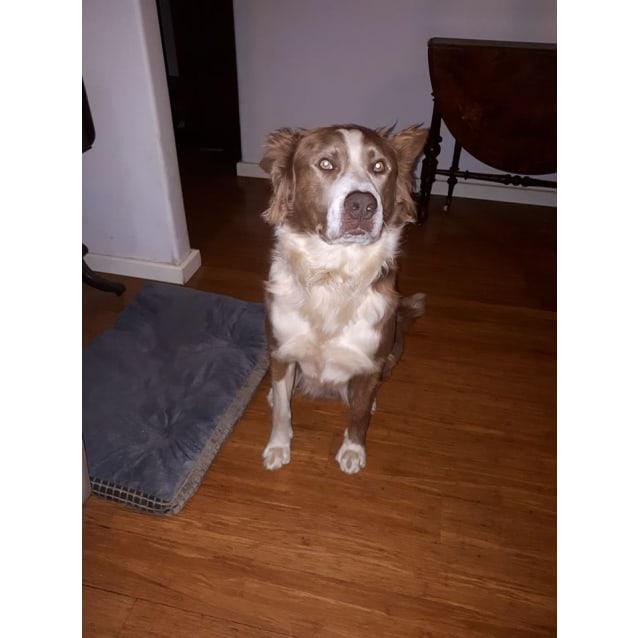 Photo of Rocco * No More Calls Please *