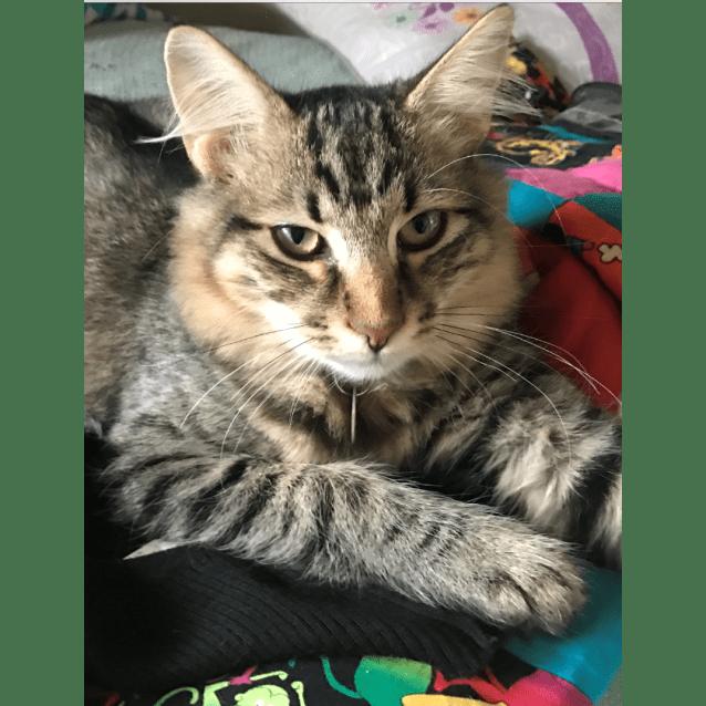 Photo of Humphrey (Bn C424)