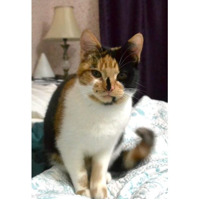 Photo of Kessie (Located In Belgrave)