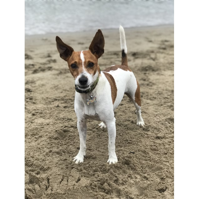 Photo of Mr Peabody