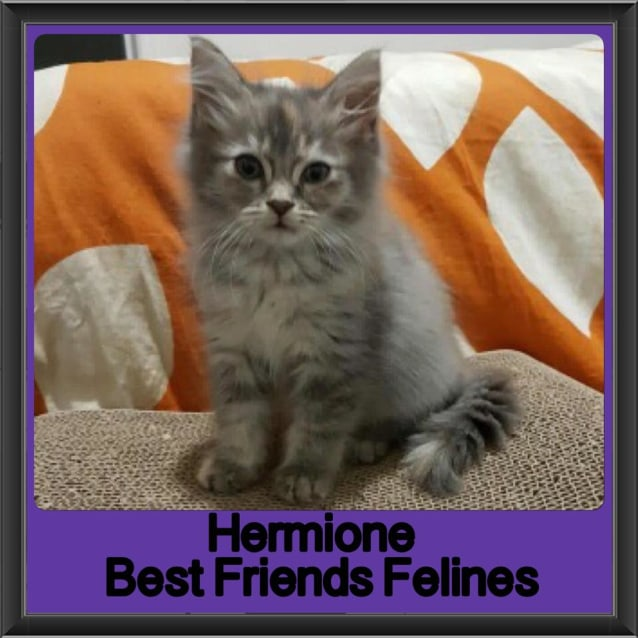 Photo of Hermione