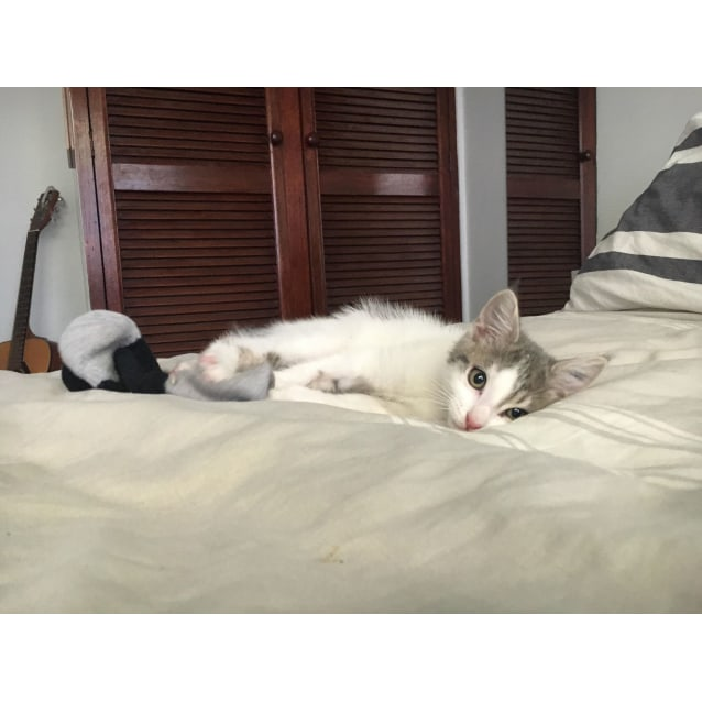 Photo of Ridley (Meet Me @ Vets On Parker Templestowe)