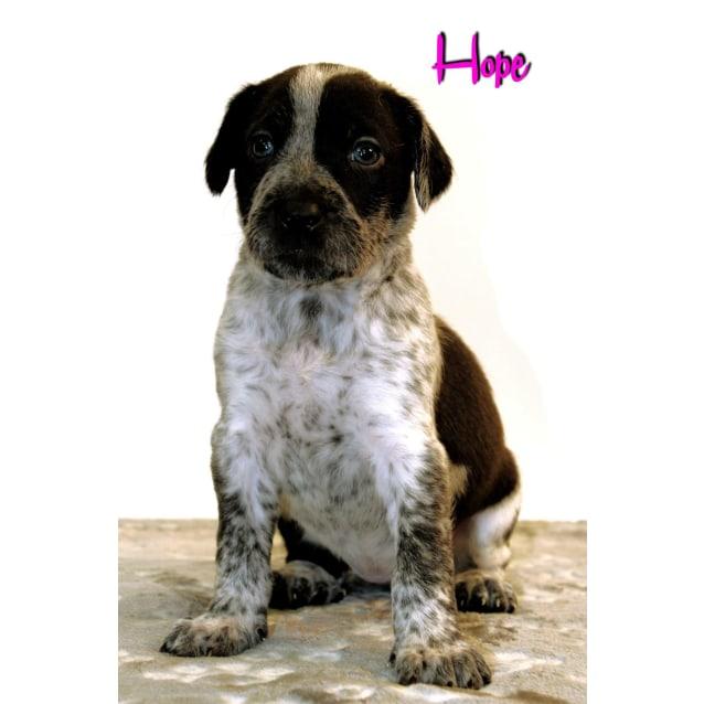 Photo of Hope