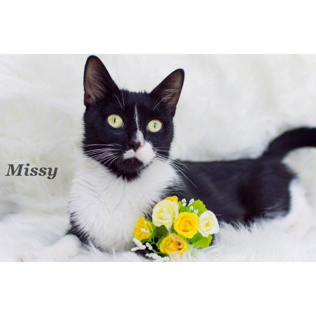 Photo of Missy   $49 Adopt Special