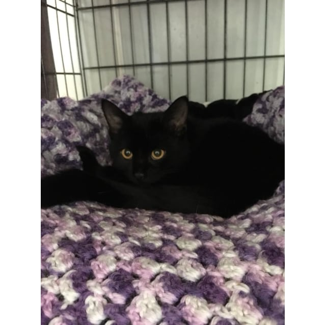 Photo of Darlene **2nd Chance Cat Rescue**