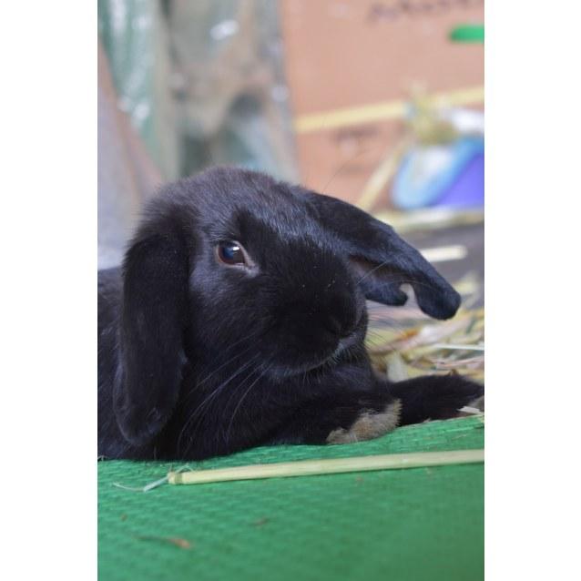 Photo of Zeldha