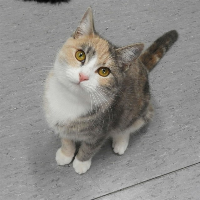 Photo of Hemi