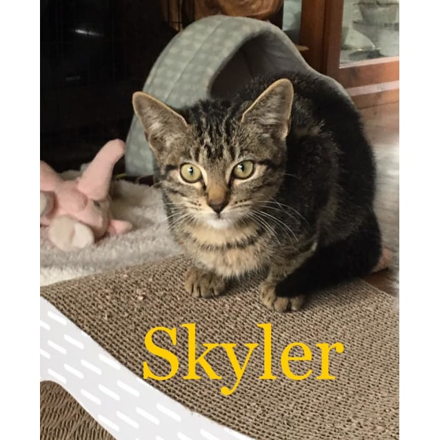Photo of Skyler