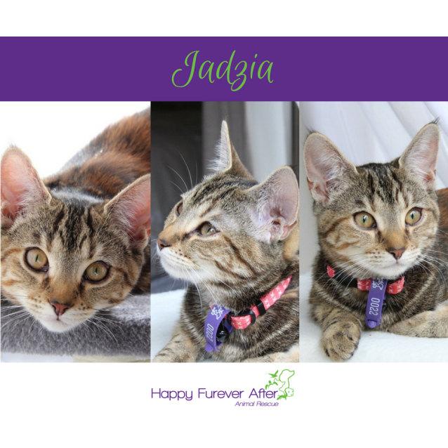 Photo of Jadzia