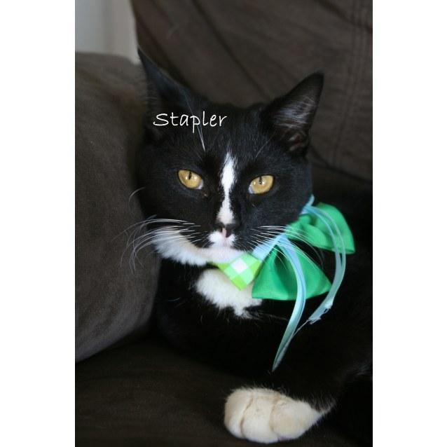 Photo of Stapler