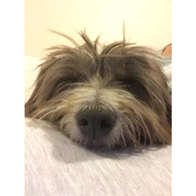 Photo of Scruffy