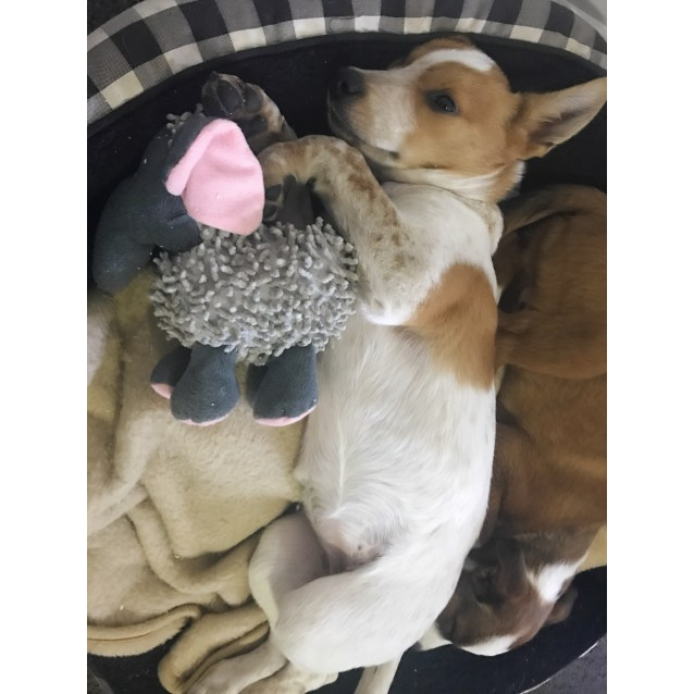 Photo of Suzy