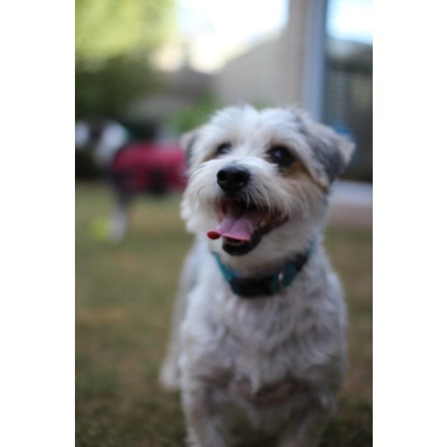 Photo of Parker
